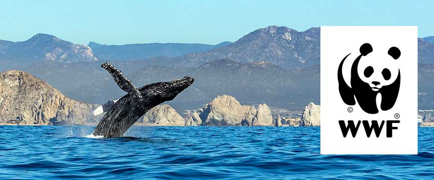 L'humanité ne doit plus agir comme si les mers et les océans étaient des ressources inépuisables